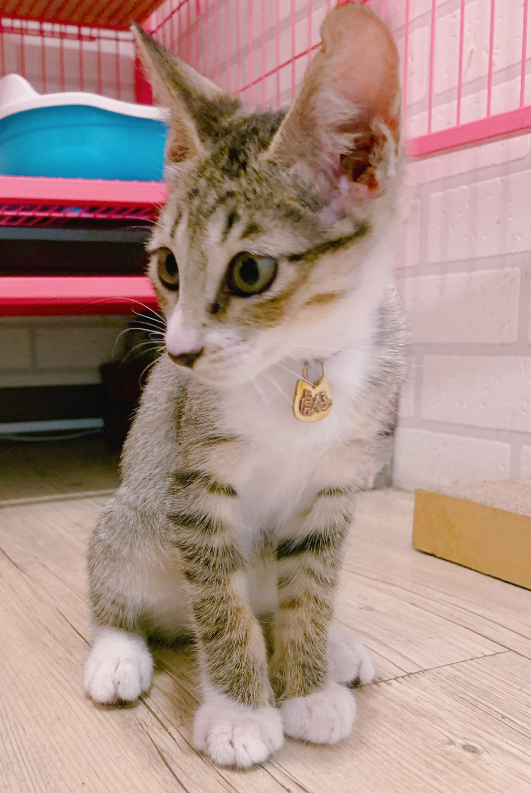 大員囡仔【寵物墜牌】黃銅×立體字x敲字x貓狗  客製化寵物項圈